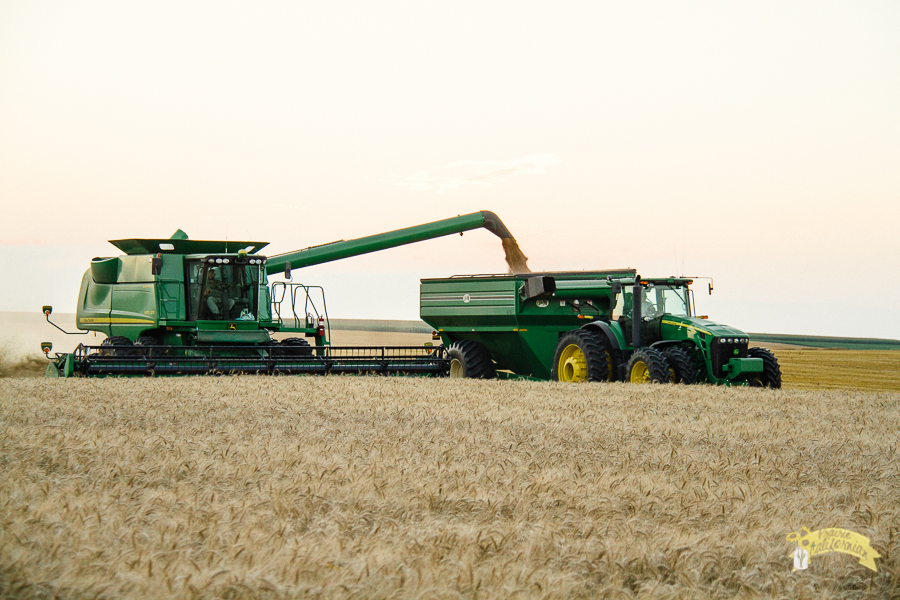 Wheat Harvest 2014-6.jpg