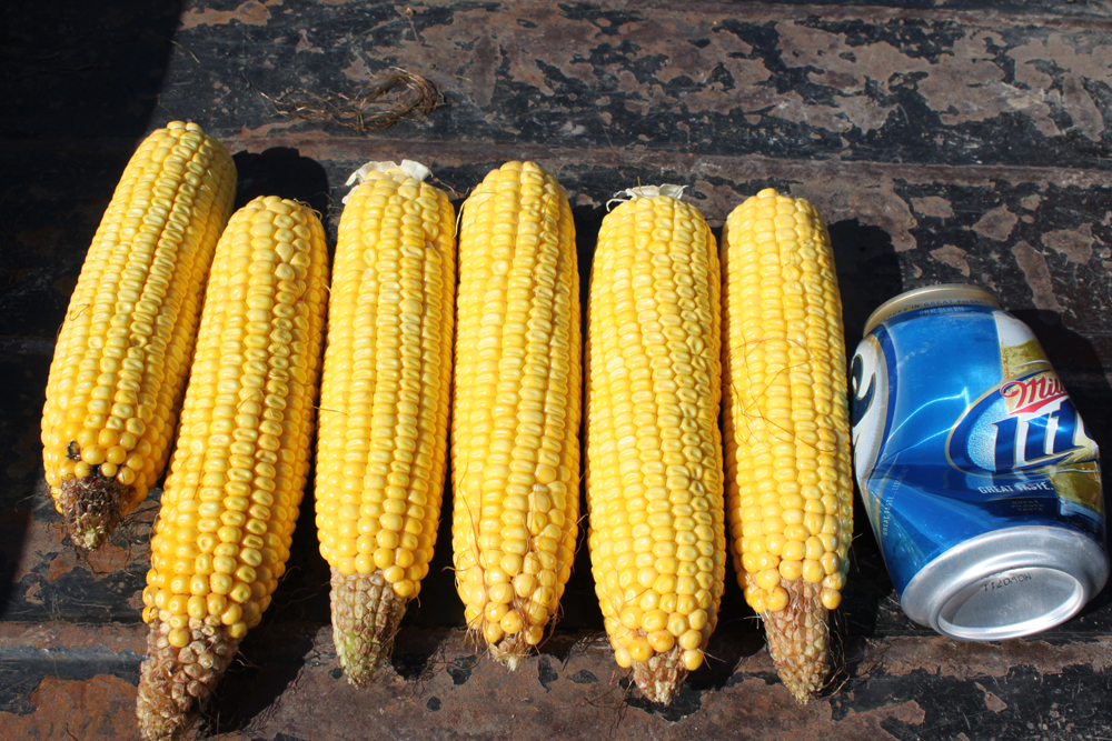 Crop Tech Tour 2011 295b.jpg