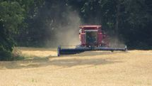 Bringing in the Wheat