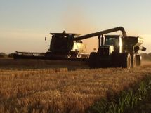 2012 wheat harvest2.jpg