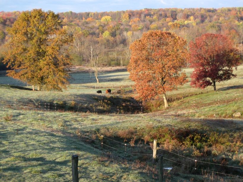 C5-2010 lush, productive pasture and grassy lanes-COMPRESSED.jpg