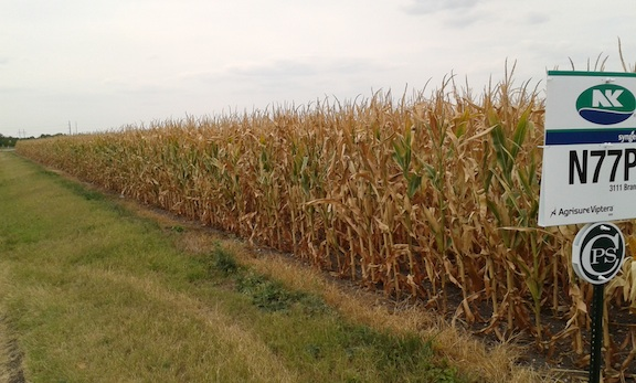 Texas Corn Harvest 2.jpg