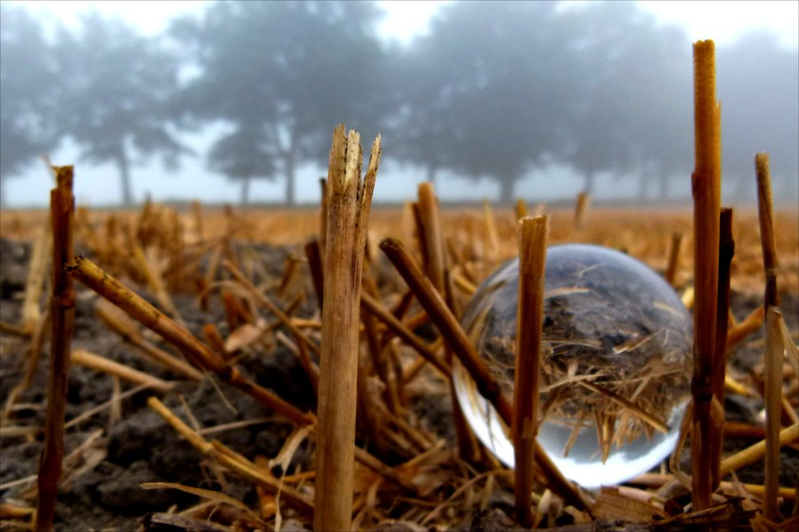 crystal_ball_in_corn_field_by_april_mo-d5f0wa9.jpg