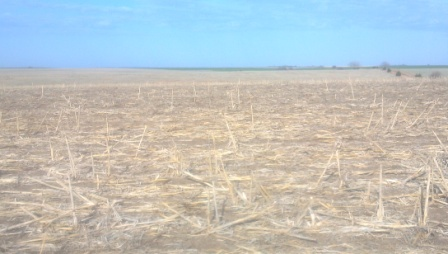 cover crop planted.jpg