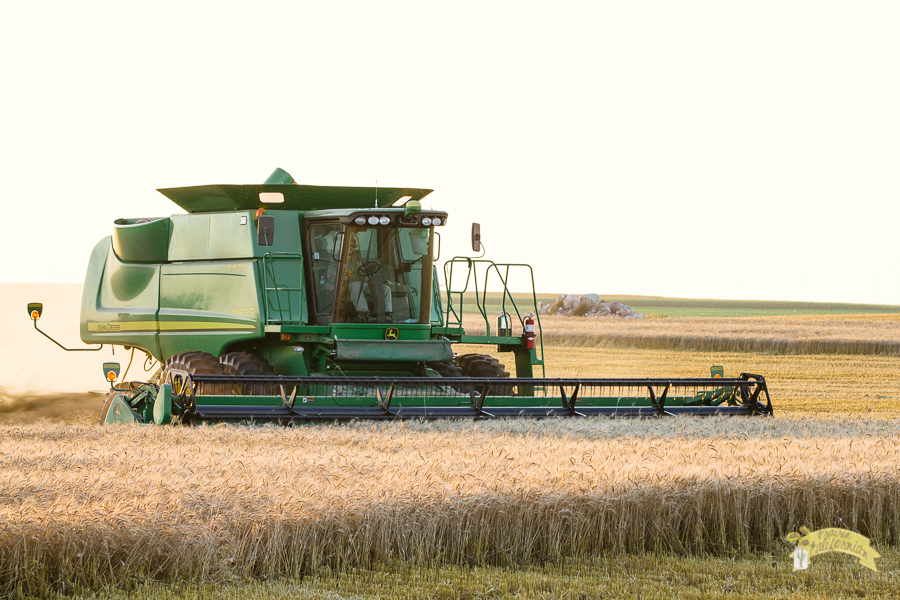 Wheat Harvest 2014-1.jpg