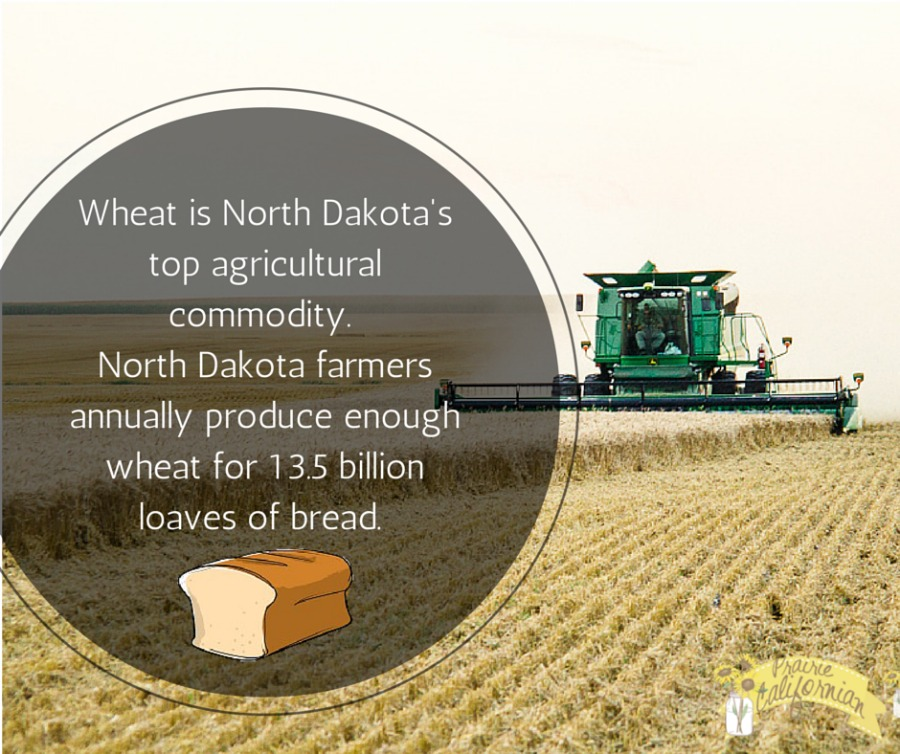 Wheat in North Dakota 1.jpg